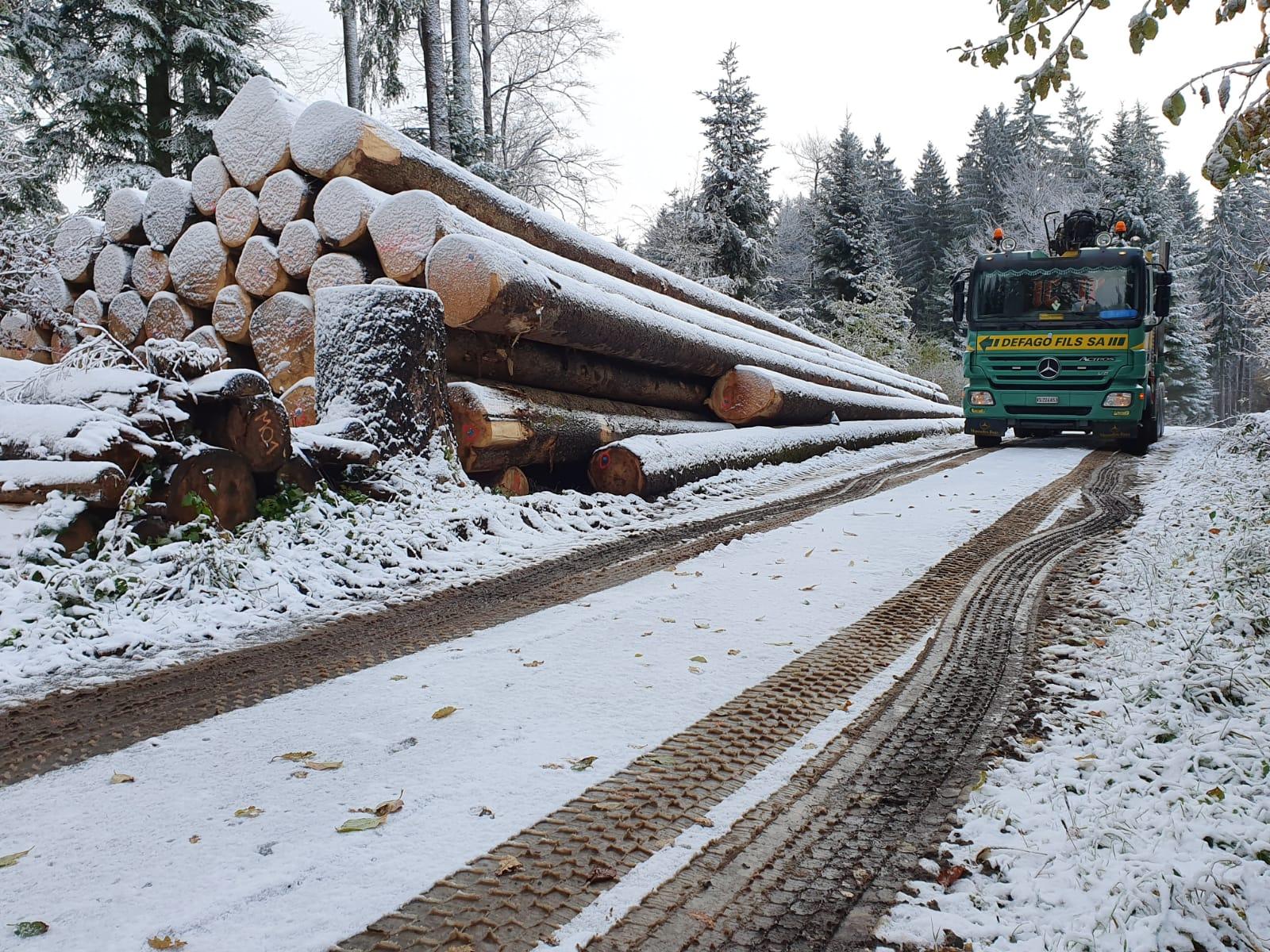 Transport en forêt